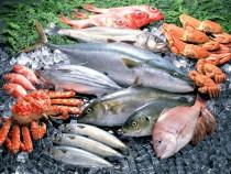 Taze Balık Harbiyiyorum