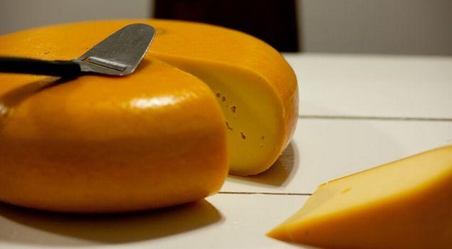 gouda peyniri