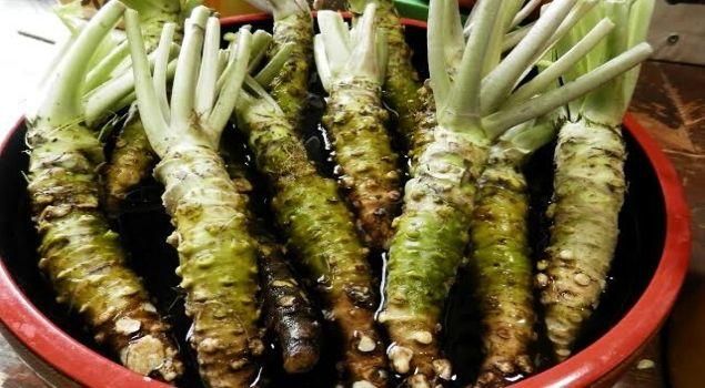 wasabi nedir